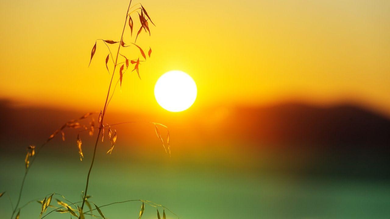 plant in sunrise